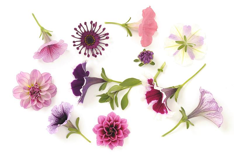 Fresh fotografie, vers fotografie, bloemen, Fides, tabletop fotografie, reclamefotografie, studiofotografie, Bas Adriaans fotografie, Den Haag, flowers, Westland